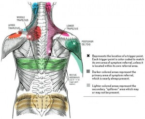 massage therapis trigger point chart